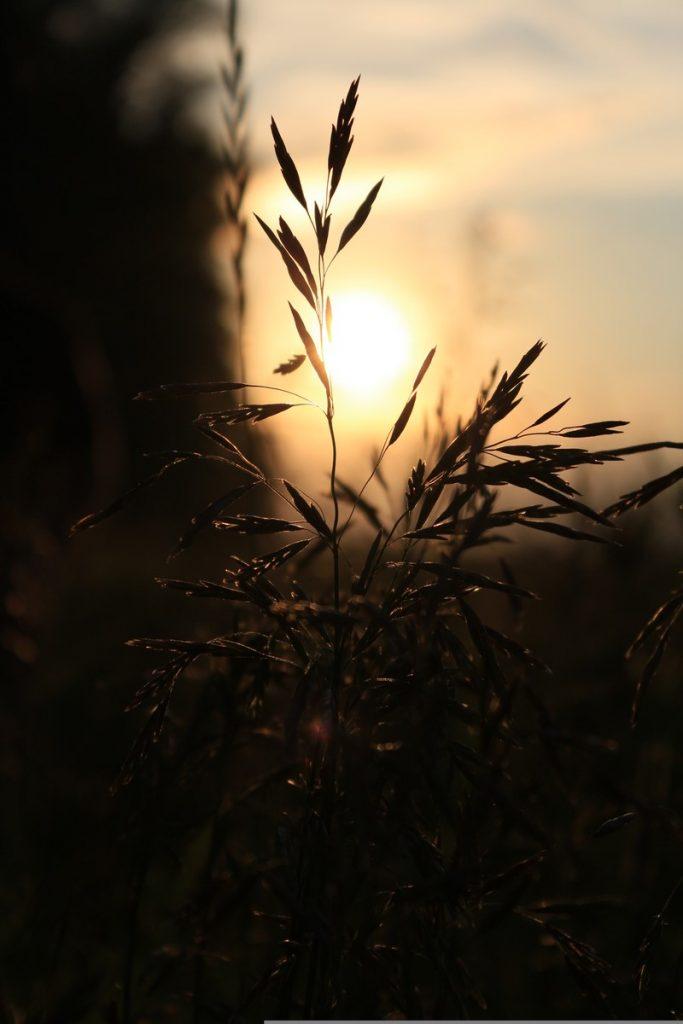Корнева Екатерина 1-4 кл фото ЦРТ Левобережный Солнце дающее жизнь